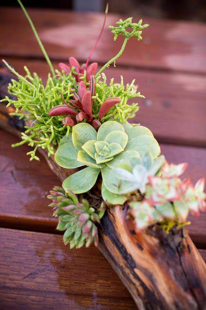 Driftwood Succulents_2