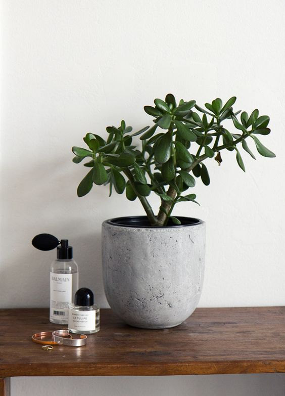 10 low maintenance indoor plants for the brisbane climate calibre real estate - Low maintenance plants for indoors ...