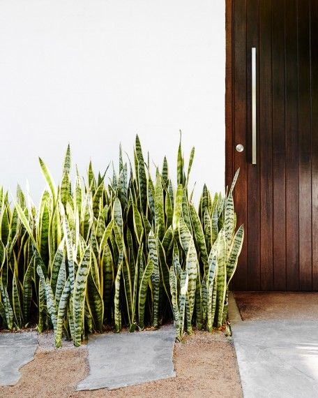 10 low maintenance indoor plants for the brisbane climate for Low maintenance indoor trees