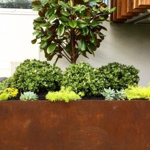 plants for your balcony plants